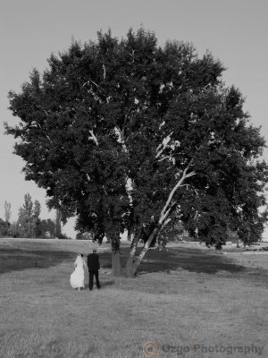 Ozgo Wedding Photography - Bride and Groom going toward the tree